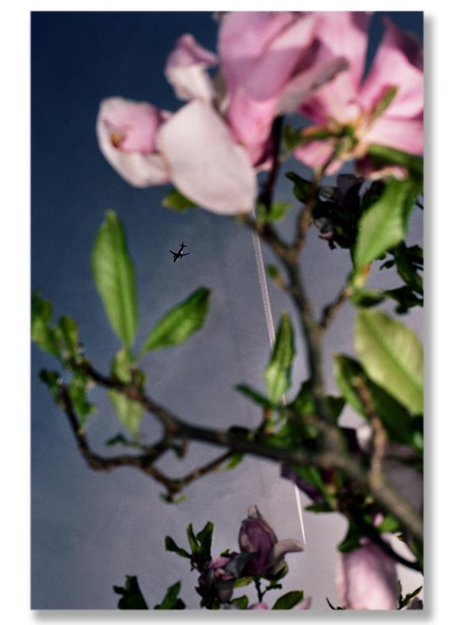 flugzeug gegen magnolia